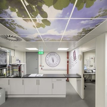 Large graphics of sun shining through leaves on the ceiling of the post room
